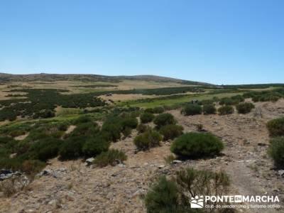 Pinar de Canencia y Mina de Plata del Indiano;rutas por madrid;viajes en febrero